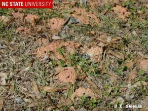 holes and small dirt mounds in lawn caused by lawn bees