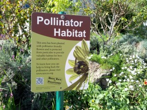 Cover photo for Pollinator Conservation Begins in the Home Garden