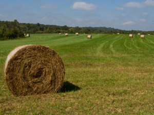 Cover photo for Survey for Chatham County Farmers and Others Involved in Agriculture & Forestry