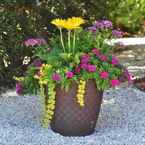 South Florida Tropical Landscape Ideas Planter Container: Container Gardening Workshop 2018