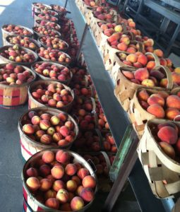 harvested peaches in baskets