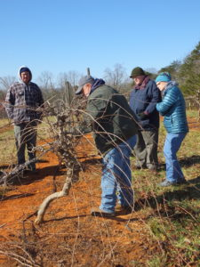 Cover photo for Time to Prune - Pruning Workshop 2019