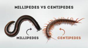 millipede adn centipede