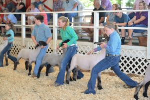 Cover photo for Burke County Youth Livestock Show