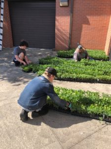volunteers helping to sort and label plants