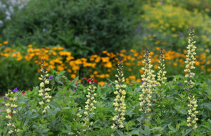 Cover photo for Late April Blooms in Pollinator Paradise