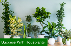 success with houseplants flyer