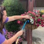 woman watering hanging basket of flowers