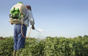man spraying pesticides with backpack sprayer