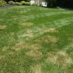 lawn with brown patch