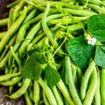 pile of fresh picked green beens