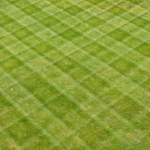 checkboard mowed lawn
