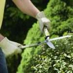 person pruning shrubs with hand clippers