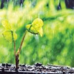 garden plant in the rain