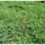 patch of grassy weeds