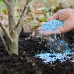 hand spreading fertilizer around a tree or shrub