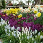 assorted spring bulb flowers in a garden
