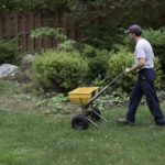 man pushing spreader with fertilizer across lawn