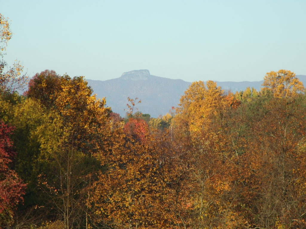 trees with fall colors of yellow and red with table rock mountain in the background