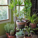 variety of houseplants in front of a window
