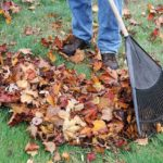 person raking leaves off the lawn