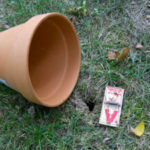 clay flower pot and mouse trap next to vole hole
