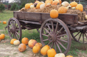 wagon with hay bales and pumpkins