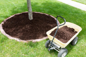 wagon with mulch next to tree with mulch ring around it
