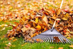 lawn rake in a pile of fall leaves