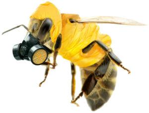 honey bee in hazmat suit and respirator